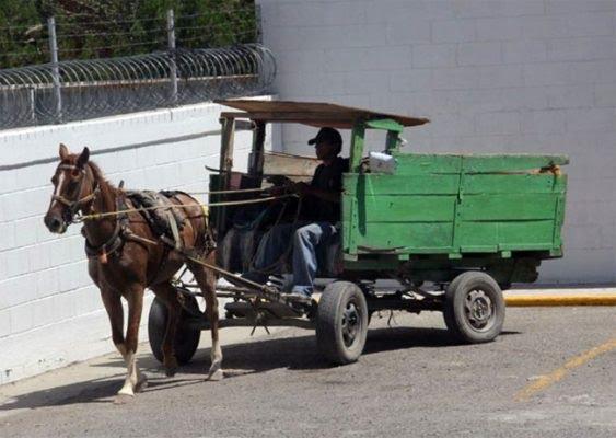 caballo jalando carreta